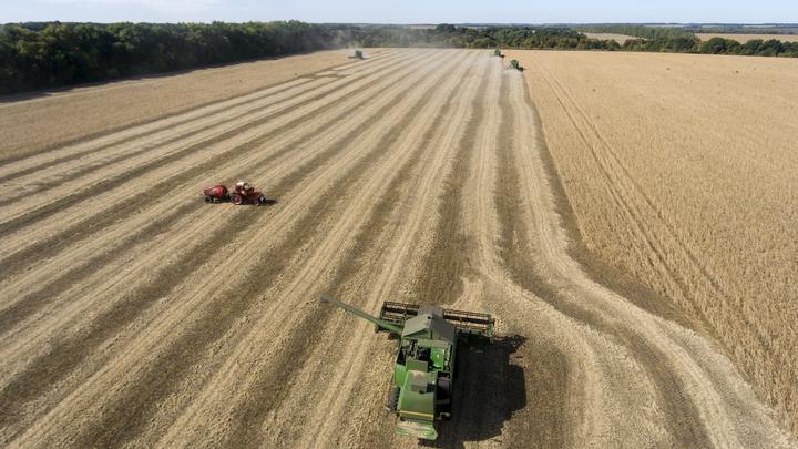 Минсельхоз собирается отрегулировать рынок зерна с помощью интервенций