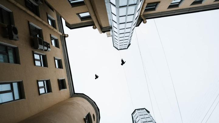 Возможная виновница массовой гибели птиц в центре Санкт-Петербурга попала на видео