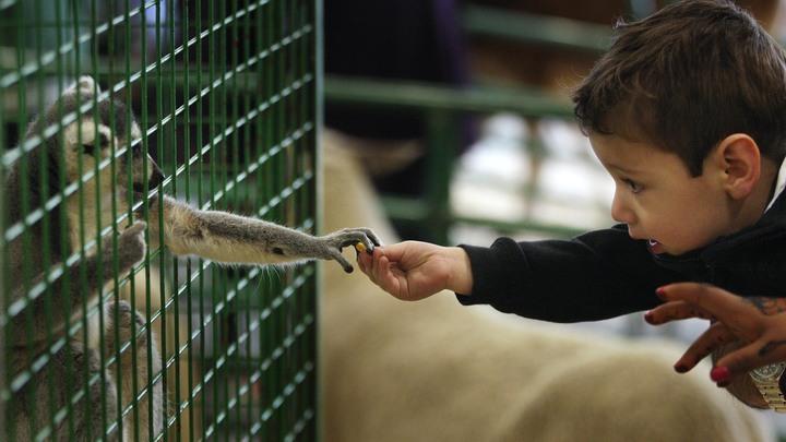 Мертвые все: В контактном зоопарке из-за прорыва трубы заживо сварились десятки животных