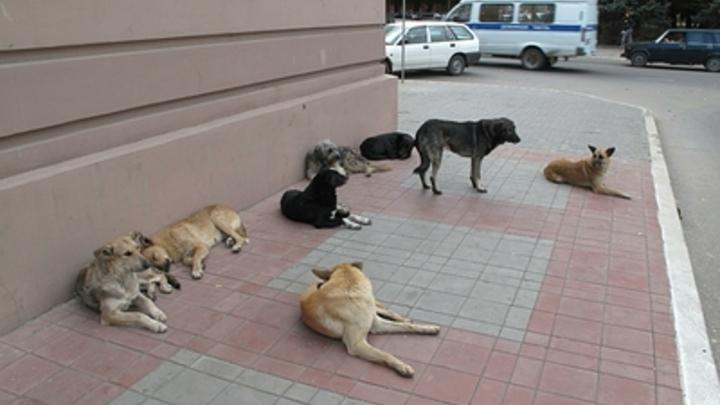 Стая бродячих собак в Башкирии загнала школьников на дерево - видео