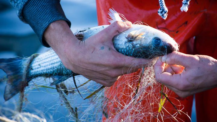 Рыбопромышленники бьют в набат: Указы президента саботируются кабмином