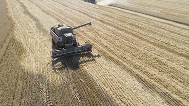 США распространяют дезинформацию об урожае зерна в России - эксперт