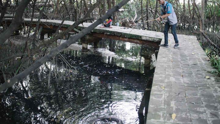 Очевидцы сняли на видео заклинателя крокодилов, совершившего роковую ошибку