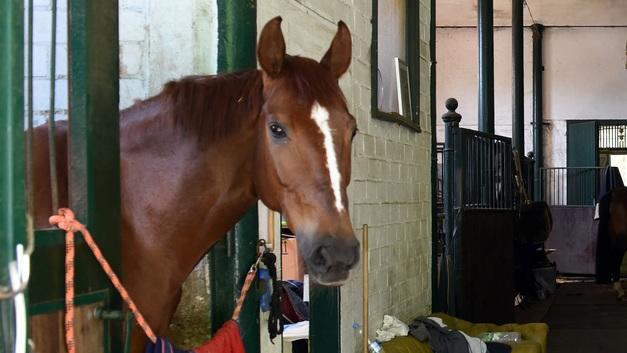 Депутат на Камчатке, решив не тратиться на бензин, пересел на коня