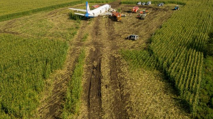 Сумевший посадить заглохший самолет в кукурузном поле летчик-герой вернулся к полетам