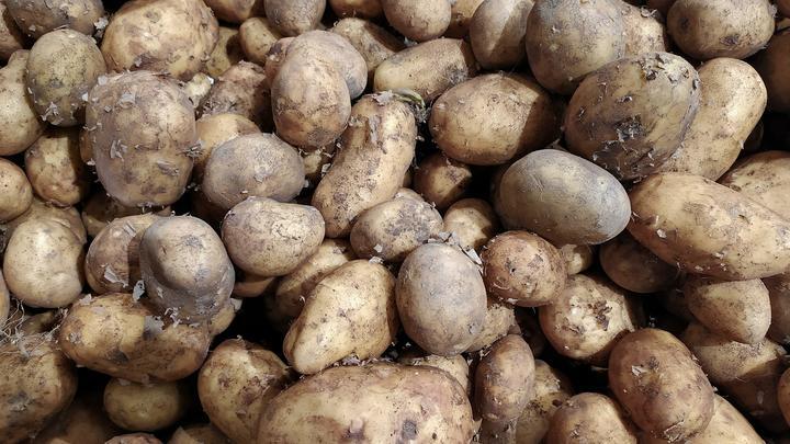 В Нижегородской области картофель за неделю подешевел на 15%