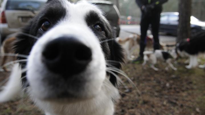 Почему собаки бросаются на автомобили? Эксперт ответил на давний вопрос