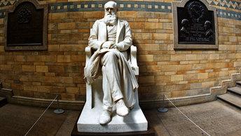 Дарвинизм и христианство не совместимы