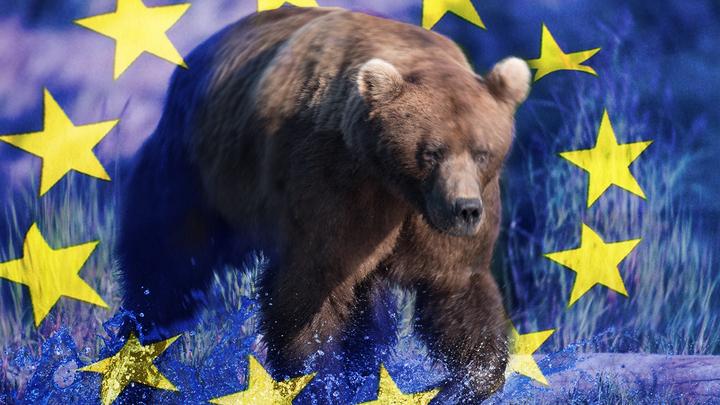 Европейский медведь бежит в Россию