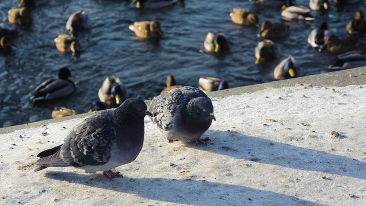 Беседуют два голубя…: Политику мира от США изобразили одним анекдотом