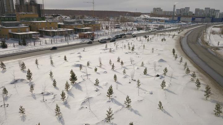В Челябинске в морозы высадили 650 деревьев