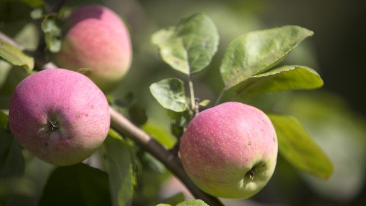 Популярный в России фрукт оказался опасным: Врач назвала группу риска