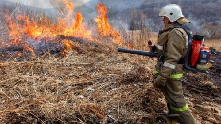 В Забайкальском крае от огня спасают 57 гектаров леса
