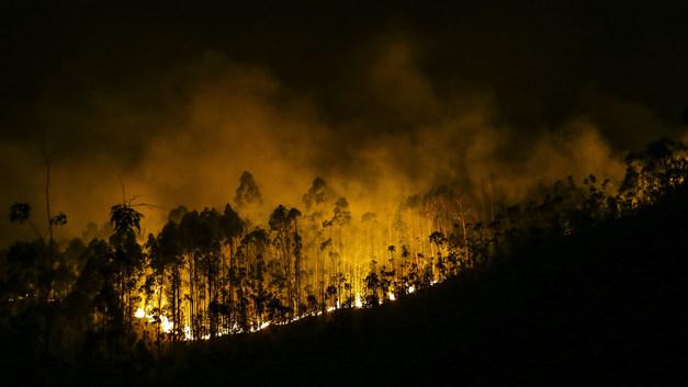 Дым от пожаров в Португалии выпал в Эстонии черным дождем