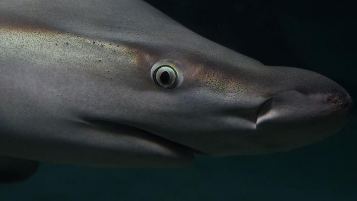 Атака акул на батискаф Би-би-си попала на видео