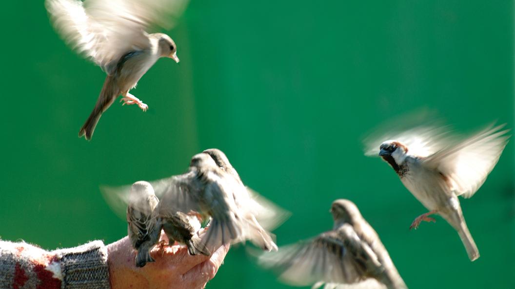 Около 50 птиц погибли, разбившись обокна здания судебной медэкспертизы