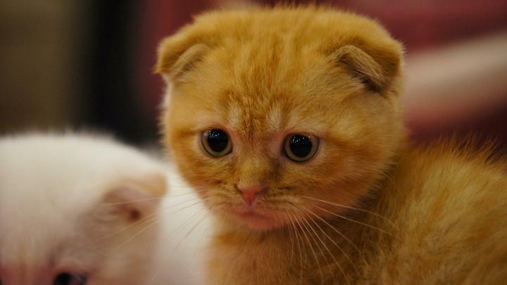 Пользователи соцсетей до слез растрогались из-за котенка с двумя мордочками