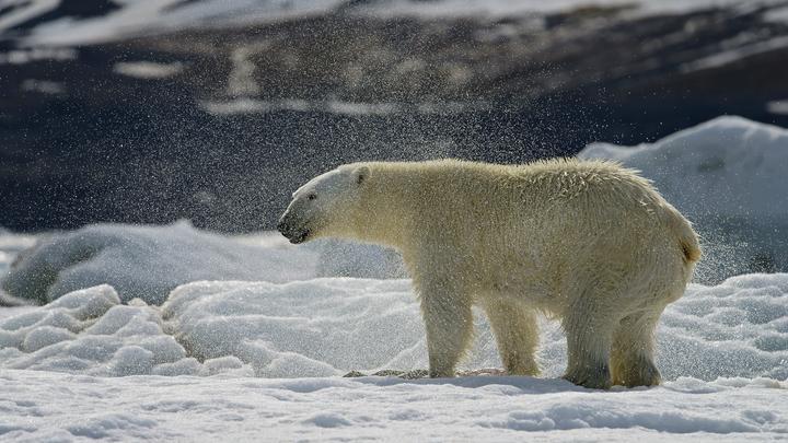 Белые медведи оперативно решили проблему свалок и ускорили строительство мусоросжигательного завода