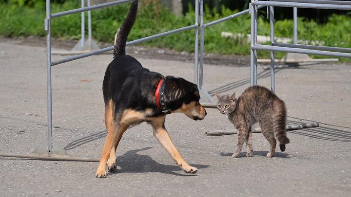 В Самарской области от нападения животных пострадало 4 тысячи человек за полгода