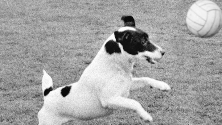 Дышала еле-еле, не верила в счастье: Собака вернулась к хозяйке спустя 12 лет
