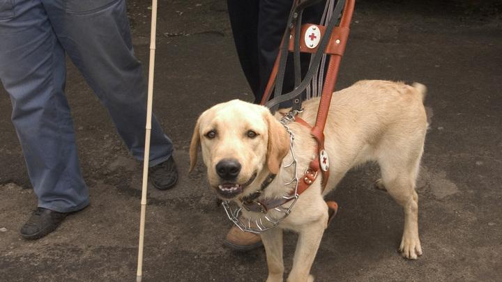 Более 80 собак-поводырей научатся ездить в московском метро