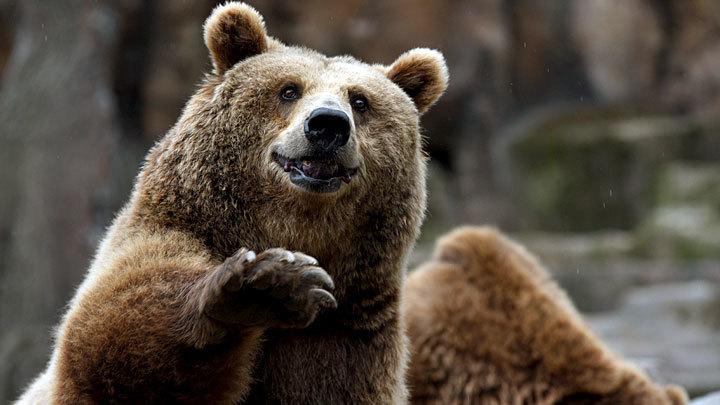 Медведи, тушканчики, клещи: Кто уже проснулся, а кто не очень