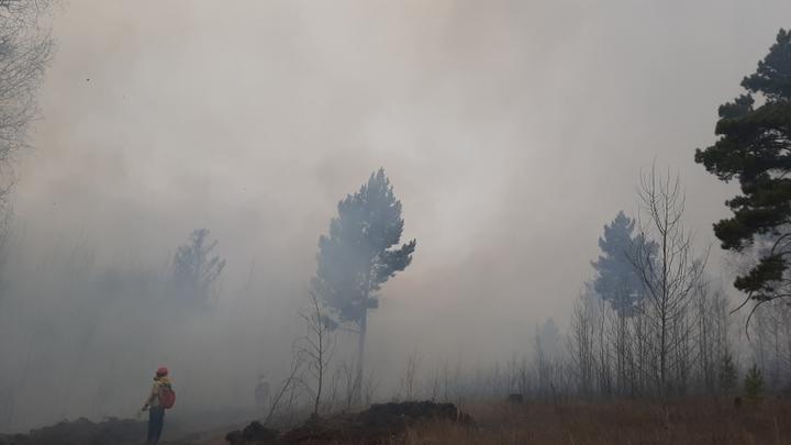 В Забайкалье ищут мото-поджигателя, из-за которого выгорел 21 гектар леса