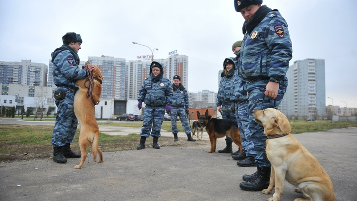 Телефонные террористы переключились с регионов на московские школы