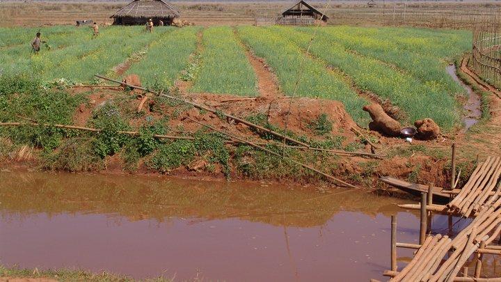 Иностранных дипломатов пригласили осмотреть деревни рохинджа в Мьянме