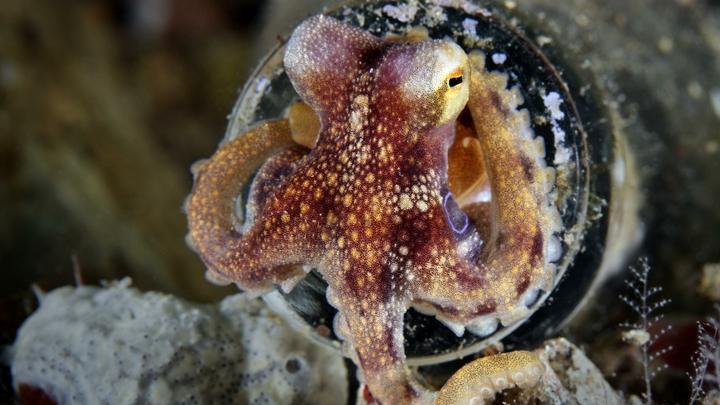 У берегов Австралии обнаружили подводный город осьминогов