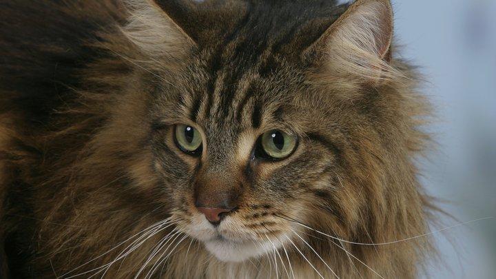 Чеснок грозит уничтожить весь подвид: Биолог об опасности клонирования котов