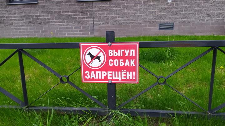 На 2000 рублей в среднем штрафуют собачников в Подмосковье
