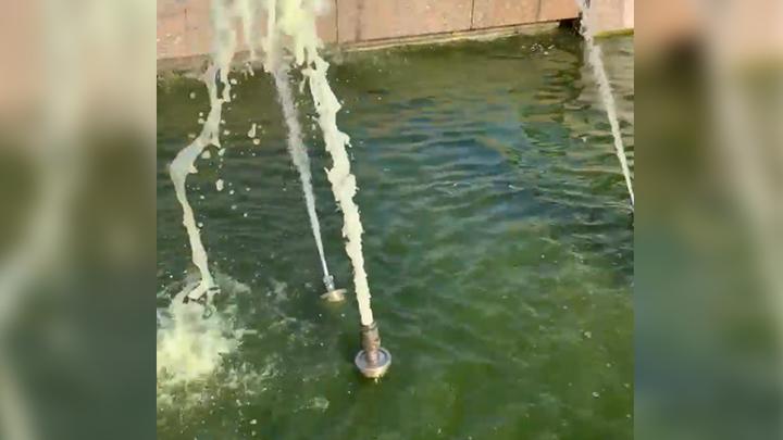 А потом спрашивают, почему вода зеленая: из-за любителей купаться в Петербурге зацвел фонтан