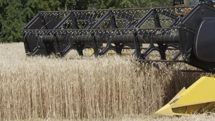 Почти 16,5 тонн зерновых собрали с начала уборочной кампании в Подмосковье
