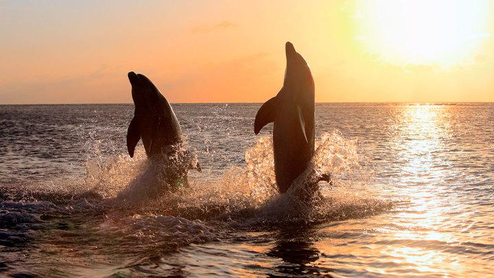 Боевые дельфины пали жертвой украинской пропаганды