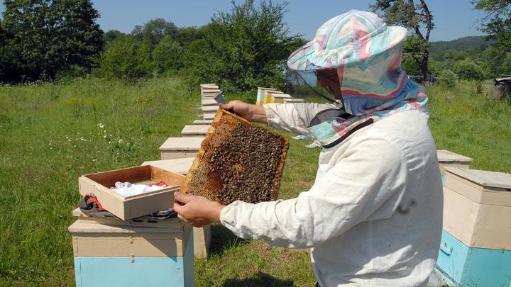 Не миллиарды - больше: В ассоциации пчеловодов подсчитали убытки бюджета из-за мора пчел от пестицидов