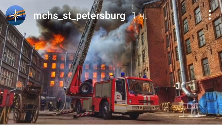 Десятки кошек из приюта в здании «Невской мануфактуры» пропали после пожара