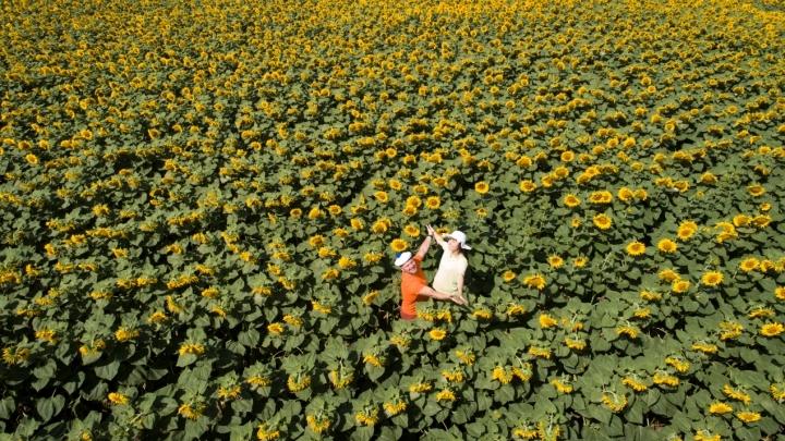 Солнечно и до +27 ожидается в Кузбассе 31 июля