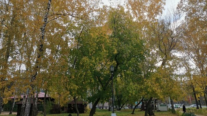 МЧС предупредило новосибирцев о сильном ветре до 18 м/с