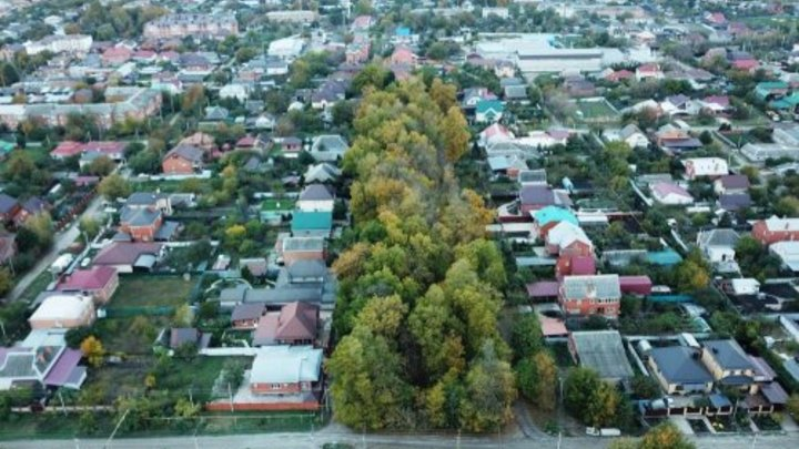 В Динском районе жители протестовали вырубку трети уникальной рощи