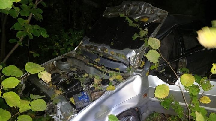 В Нижегородской области автомобиль сбил лося, есть жертвы