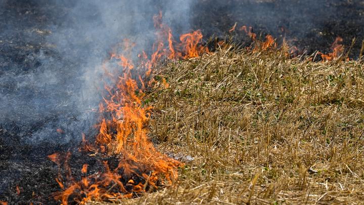 Иранцы помогли армянам потушить лесной пожар