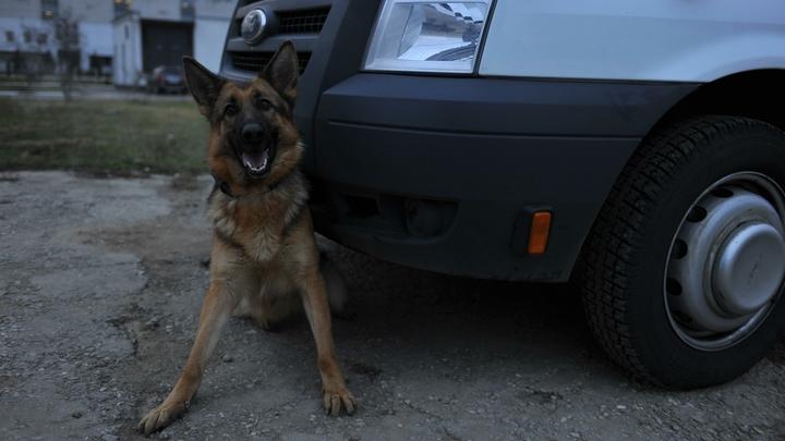 В Петербурге служебная собака вывела силовиков на след жертвы ревнивого мужа