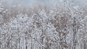 В Ямало-Ненецком автономном округе разоблачили фейк об убийственных холодах