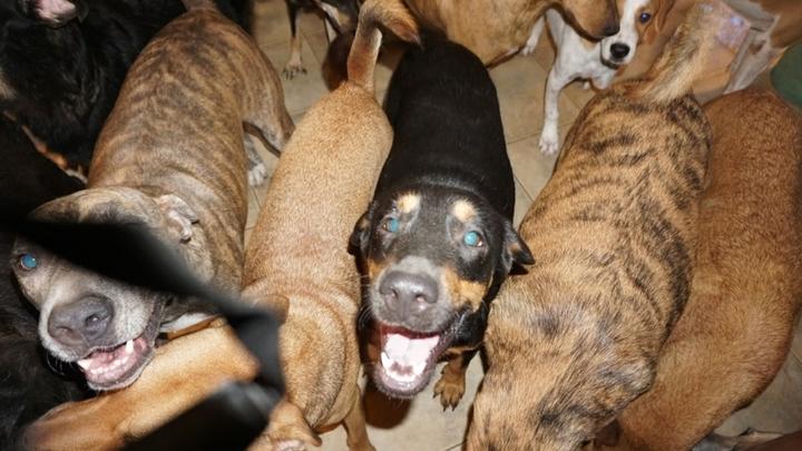 Дайте себя укусить: Как защититься от агрессивной собаки