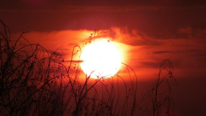Аномальная жара вернётся в Ростовскую область в первые дни августа