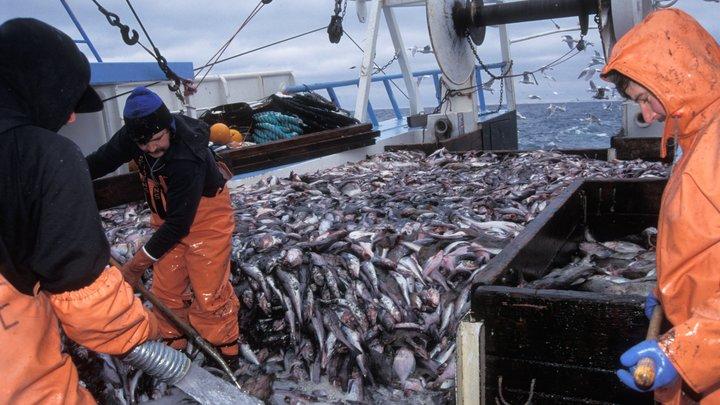 Таможенные пошлины не страшны – мы поставляем минтай в КНР: В Росрыболовстве ответили на статью о захвате Россией рыбного рынка в США