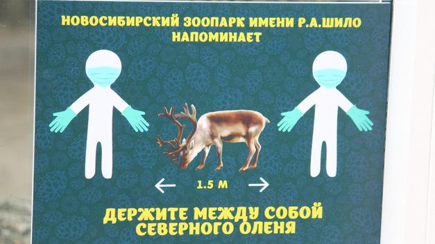 Краткие итоги июня для жителей Новосибирской области