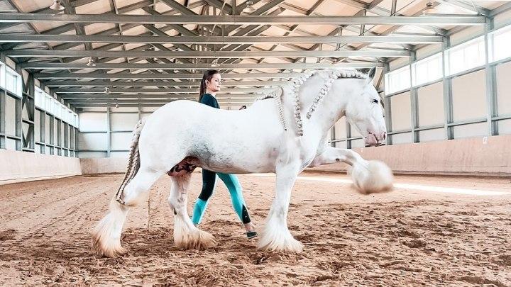 Конь переехал из Кузбасса в Москву и стал звездой Instagram