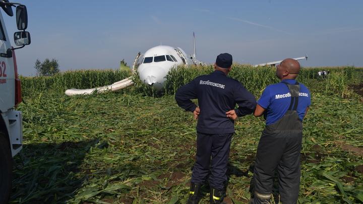 Остался один нос: А321 за одну ночь почти вывезли с кукурузного поля